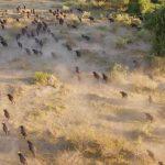 دانلود مستند شکارچیان بزرگ افریقا Africa's Giant Killers مالتی مدیا مستند
