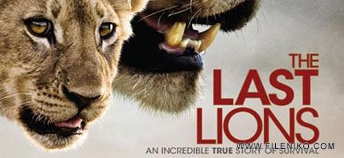 دانلود مستند The Last Lions 2011 آخرین شیرها دوبله فارسی + زبان اصلی با کیفیت Full HD
