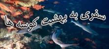 20746 222x100 - دانلود مستند سفر به بهشت کوسه ها Journey To Shark Eden دوبله فارسی