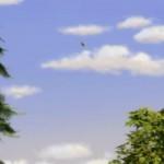 Alpha.and .Omega .2010 EN BR Rip 720p www.fileniko.com .mkv snapshot 00.28.03 2015.04.07 16.28.35 150x150 - دانلود انیمیشن Alpha and Omega 2010 الفا و امگا با دوبله فارسی