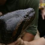eatAliveAnaconda fileniko 6 150x150 - دانلود مستند Eaten Alive Anaconda 2014 زنده خواری آناکوندا