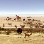 Africa.5 150x150 - دانلود مجموعه مستند Africa 2013 آفریقا دوزبانه دوبله فارسی+انگلیسی