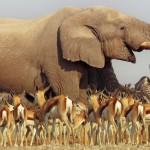 Africa.6 150x150 - دانلود مجموعه مستند Africa 2013 آفریقا دوزبانه دوبله فارسی+انگلیسی