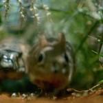 HK2014 fileniko 1 150x150 - دانلود مستند Hidden Kingdoms پادشاهی پنهان حیوانات دوزبانه: اصلی+دوبله فارسی