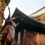 HK2014 fileniko 6 150x150 - دانلود مستند Hidden Kingdoms پادشاهی پنهان حیوانات دوزبانه: اصلی+دوبله فارسی