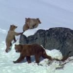 دانلود سریال مستند North America طبیعت آمریکای شمالی مالتی مدیا مستند