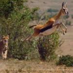 bbc hunt fileniko 1 150x150 - دانلود مستند شکار  The Hunt 2015 دوزبانه دوبله فارسی و زبان اصلی