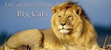 Life on the Savannah: Big Cats