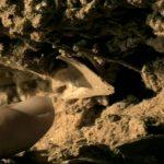 دانلود مستند ریشه های ما Origins of Us مالتی مدیا مستند