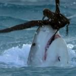 south.pacific 2 150x150 - دانلود سریال مستند South Pacific اقیانوس آرام جنوبی با دوبله فارسی