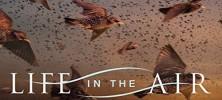 Air 222x100 - دانلود مستند زندگی در آسمان 2016 Life In The Air