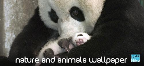 animals - دانلود مجموعه والپیپر HD با موضوع طبیعت و حیوانات