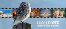 wall 222x100 - دانلود مجموعه تصاویر با موضوع حیوانات و طبیعت