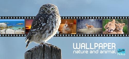 wall - دانلود مجموعه تصاویر با موضوع حیوانات و طبیعت