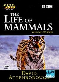 زندگی پستانداران