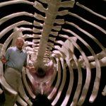 mmamml 1 150x150 - دانلود سریال مستند The Life of Mammals زندگی پستانداران