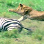 mmamml 2 150x150 - دانلود سریال مستند The Life of Mammals زندگی پستانداران
