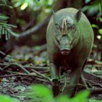 دانلود سریال مستند The Life of Mammals زندگی پستانداران مالتی مدیا مستند