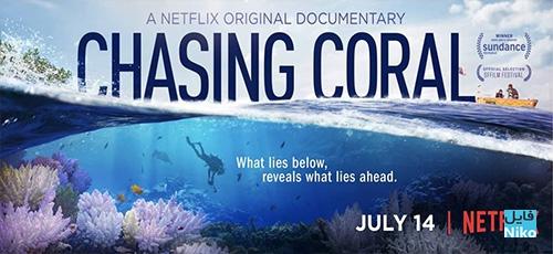 19437595 1704219369882193 9011812098570543886 n - دانلود مستند Chasing Coral 2017 با زیرنویس انگلیسی