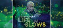 2 8 222x100 - دانلود مستند حیاتی که می درخشد Attenboroughs Life That Glows 2016 با دوبله فارسی