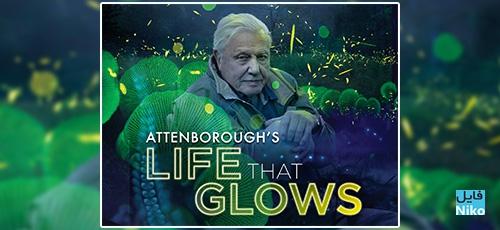 دانلود مستند حیاتی که می درخشد Attenboroughs Life That Glows 2016 با دوبله فارسی