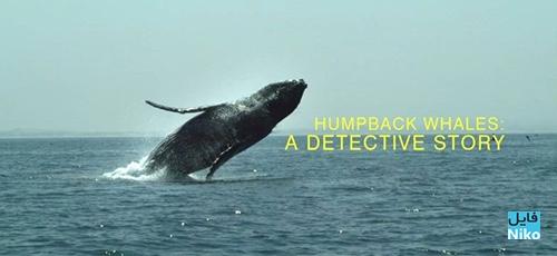 1 78 - دانلود مستند Humpback Whales: A Detective Story 2019 با زیرنویس انگلیسی