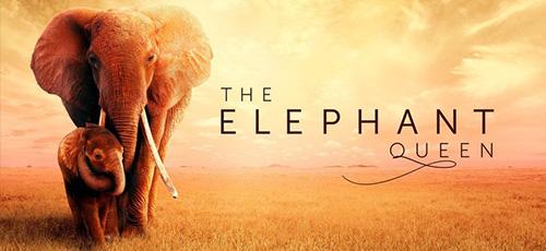 2 6 - دانلود مستند The Elephant Queen 2019