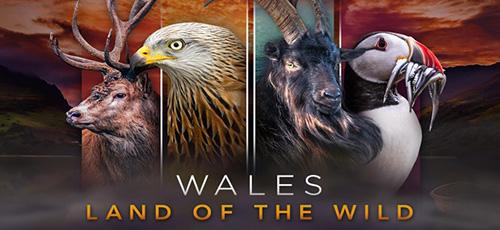 0 8 - دانلود مستند Wales Land of the Wild 2019 ولز سرزمین حیات وحش