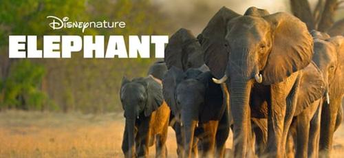 1 54 - دانلود مستند Elephant 2020 محصولی از دیزنی نیچر با زیرنویس فارسی
