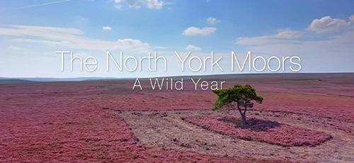 1 2 - دانلود مستند BBC A Wild Year 2020 یک سال خشن