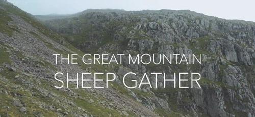 دانلود مستند The Great Mountain Sheep Gather 2020