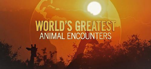 دانلود مستند Worlds Greatest Animal Encounters 2020